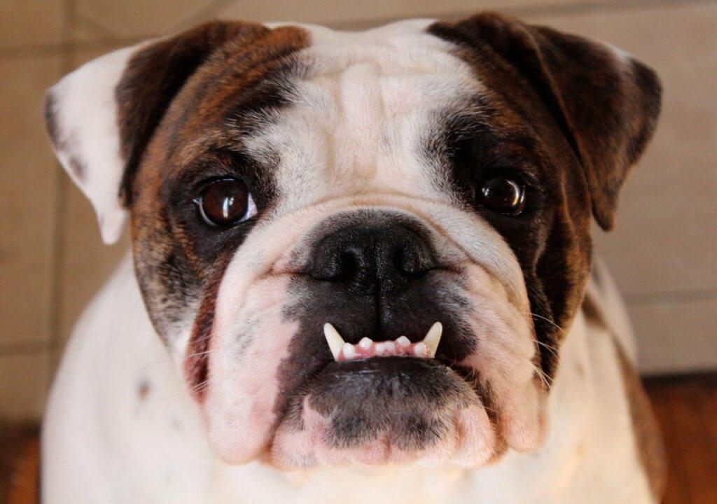 Underbett kan leda till ett tandkött som blöder.